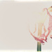 Minimalist Challenge - Flowers 3 by annied