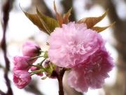 1st Apr 2021 - Almost a bouquet...