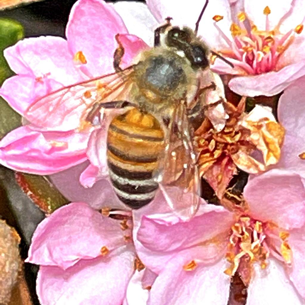 Bee on Flower Macro by kathyboyles