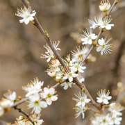 12th Apr 2021 - Blossomtime