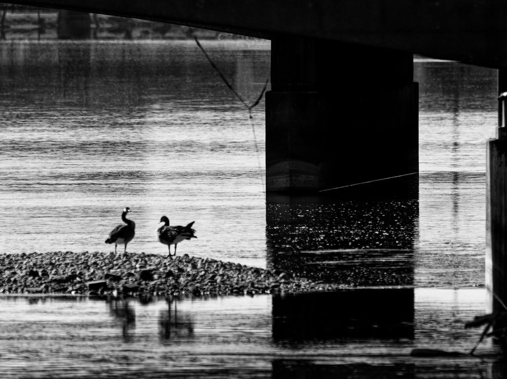 under a bridge  by rminer