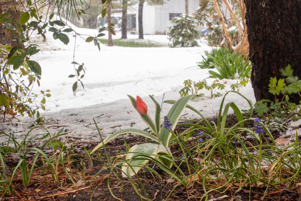Secret Garden - Day 16 by tdaug80