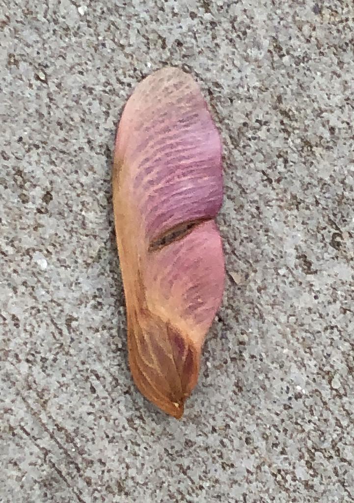 Pink maple key by homeschoolmom