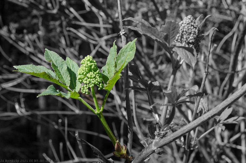 Spring Time - 2021_04_16 by byrdlip