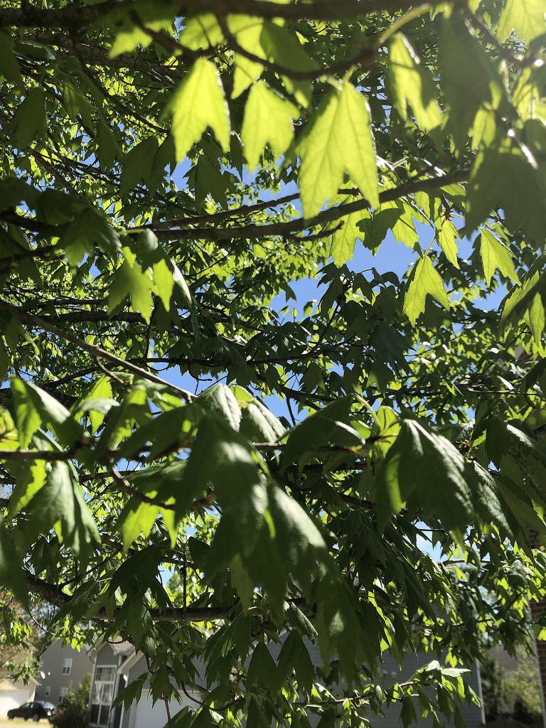 Leafy by homeschoolmom
