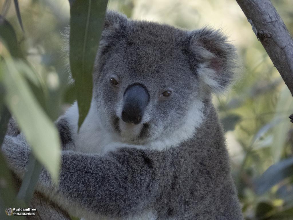 Isn't she lovely by koalagardens