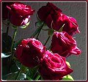 17th Apr 2021 - roses