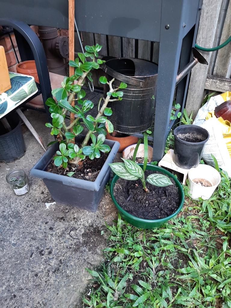 Happy Plants  by mozette