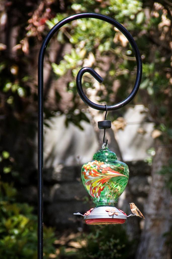 Hummingbird Feeder by jaybutterfield