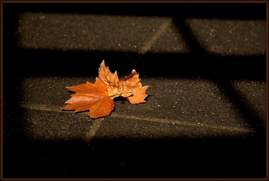 Autumn by dide