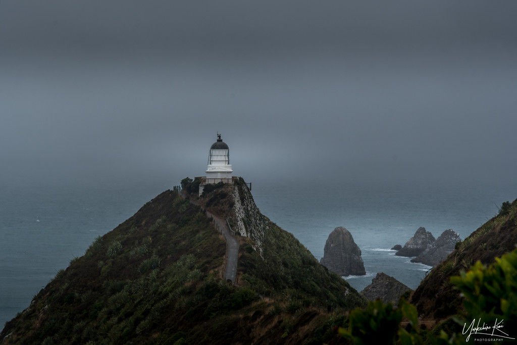 Nugget Point Lighthouse by yorkshirekiwi