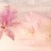 Get Pushed 455 - Frozen Flowers 1