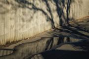 17th Apr 2021 - Autumnal Shadows