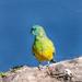 Interesting Parrot