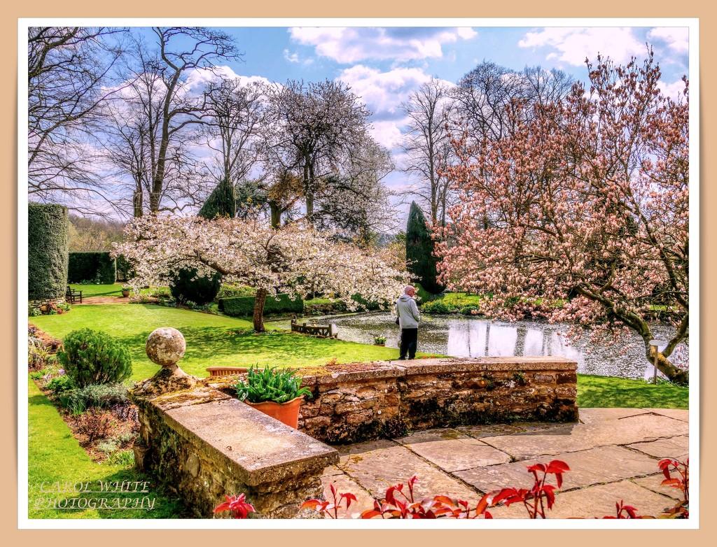 Blossomtime,Coton Manor Gardens by carolmw