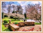 17th Apr 2021 - Blossomtime,Coton Manor Gardens