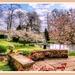 Blossomtime,Coton Manor Gardens