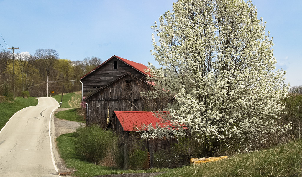 Rural buildings in the spring by mittens