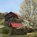 Rural buildings in the spring