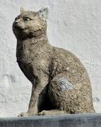 17th Apr 2021 - Cat