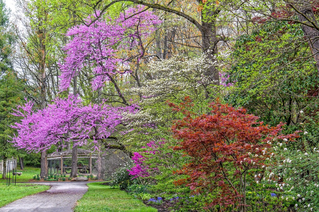 The Colors of Spring by danette