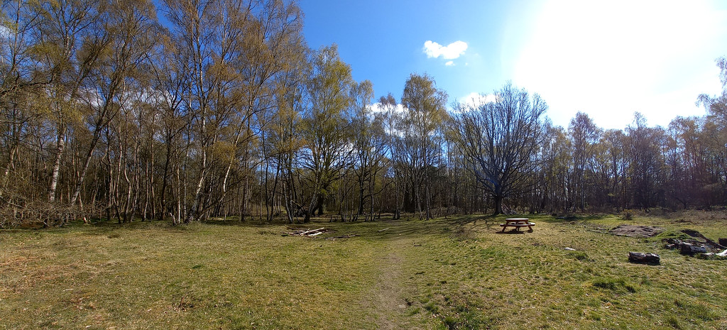 April 15th Southwood Picnic Area by valpetersen