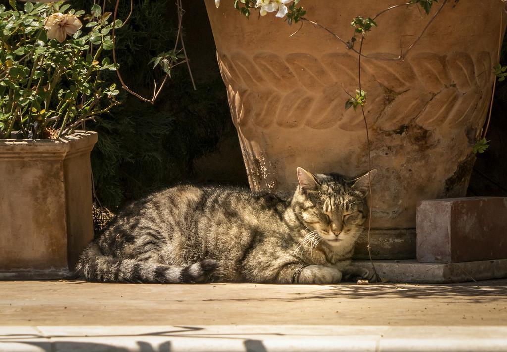 O Solo Meow by Weezilou