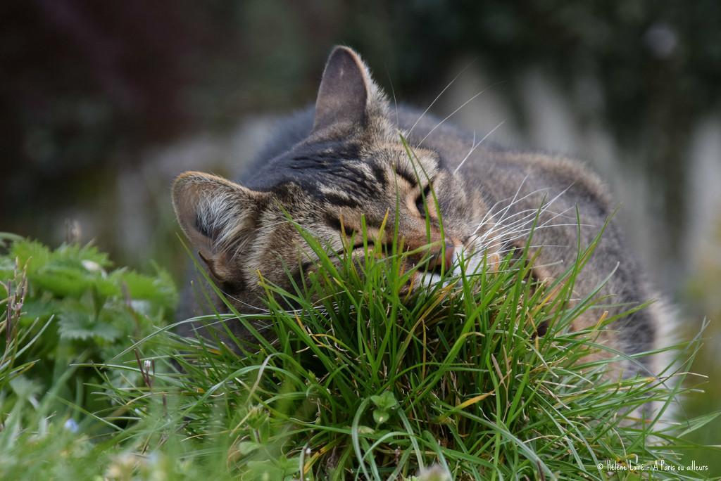 Really enjoying the garden!  by parisouailleurs