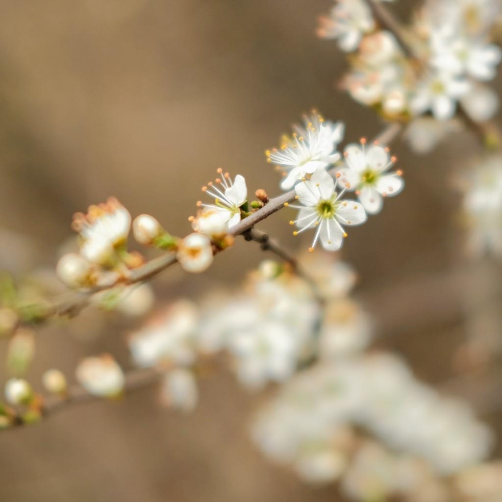Blossom Blur by 4rky