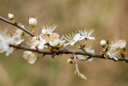 14th Apr 2021 - Branching Out