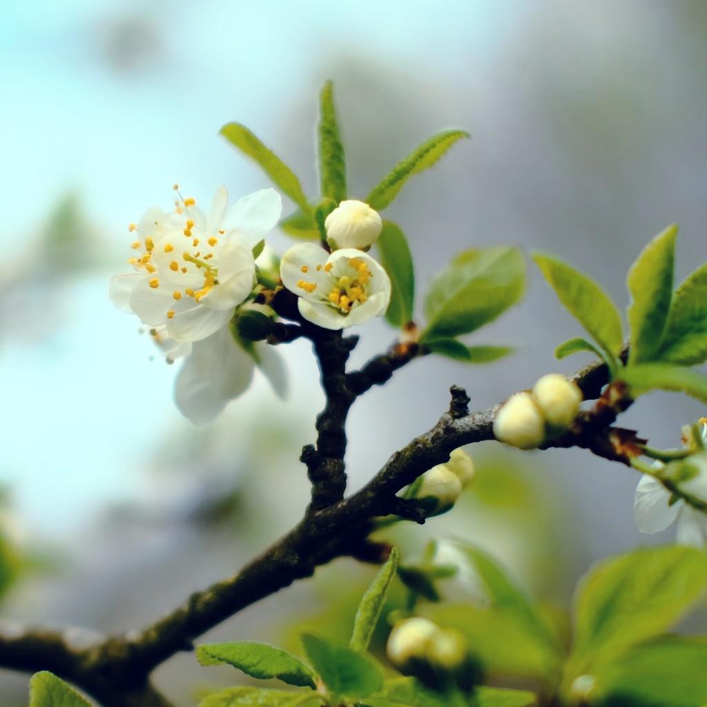Springtime by 4rky