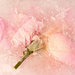 Get Pushed 455 - Frozen Flowers 3