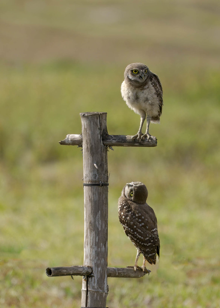 Hey bro, what do you see up there? by dutchothotmailcom