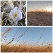 17th Apr 2021 - Beautiful Evening on the Prairie