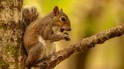 17th Apr 2021 - Dirty Mouth Squirrel!