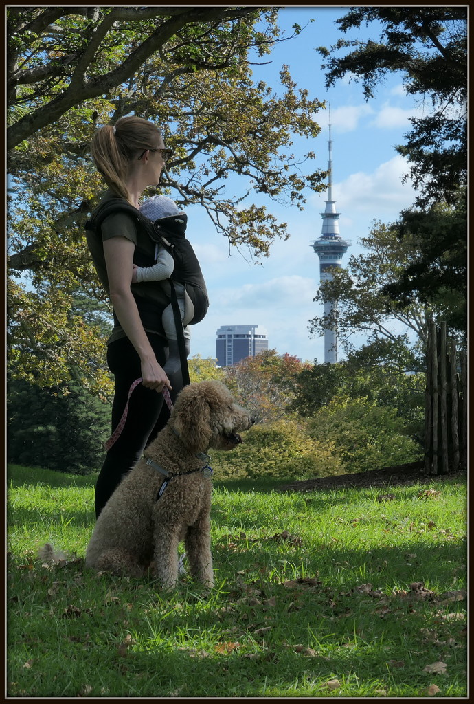 Walking in the Domain by dide