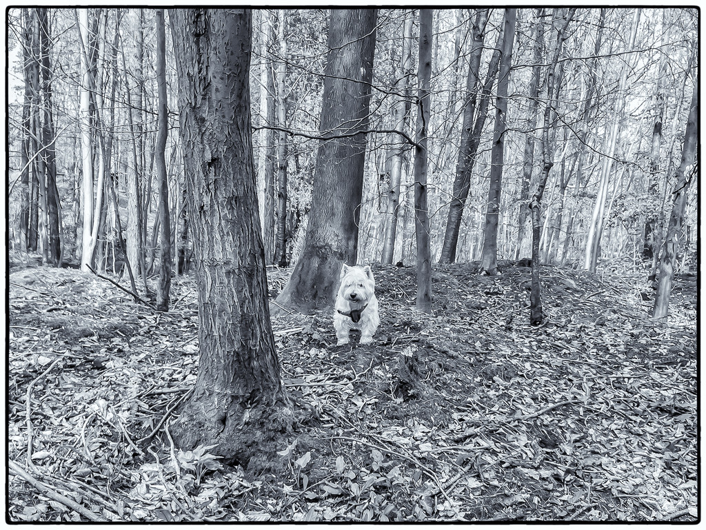 George in the woods by pamknowler