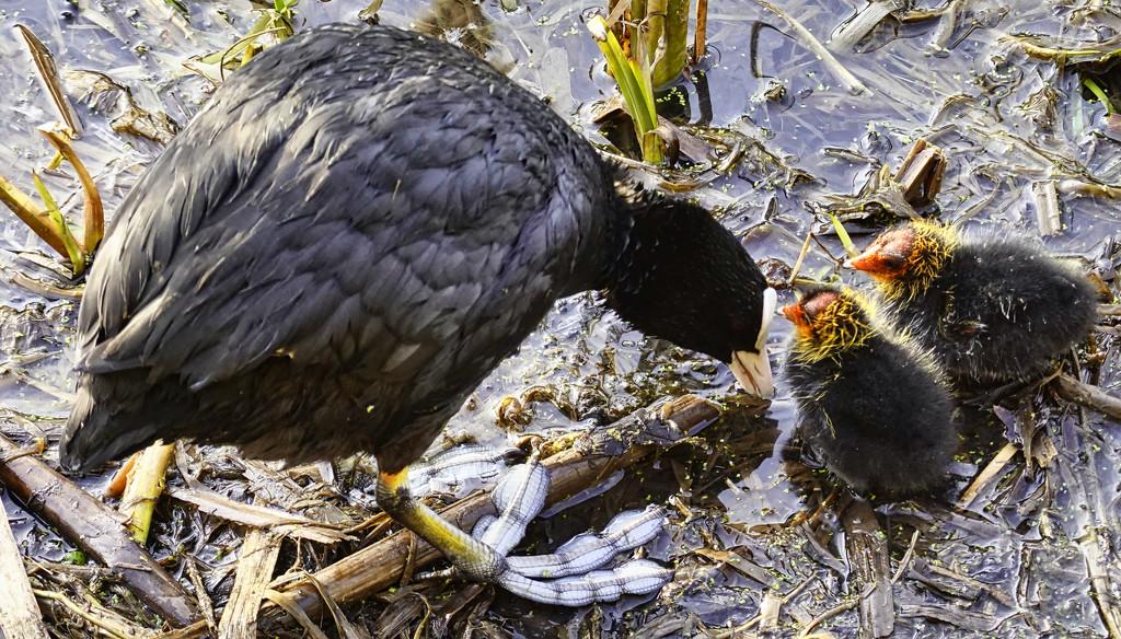 Feeding Chicks. by tonygig