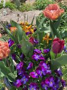 17th Apr 2021 - I love spring flowers
