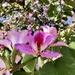 Orchid Tree by loweygrace