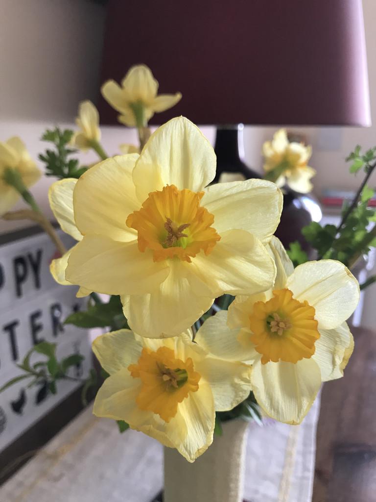 Spring by daffodill