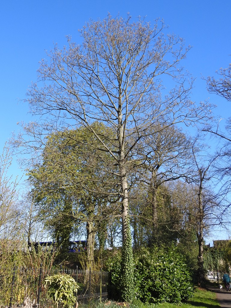 Trees by oldjosh