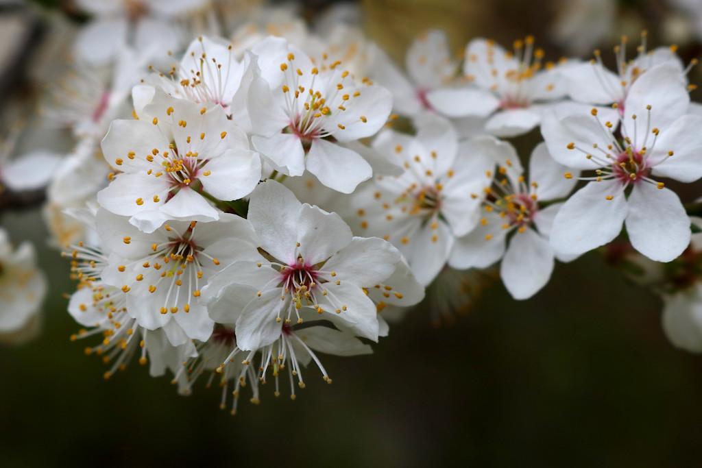 Květy by petrv0