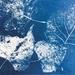 Autumn Cyanotype