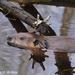 Close Encounter by falcon11