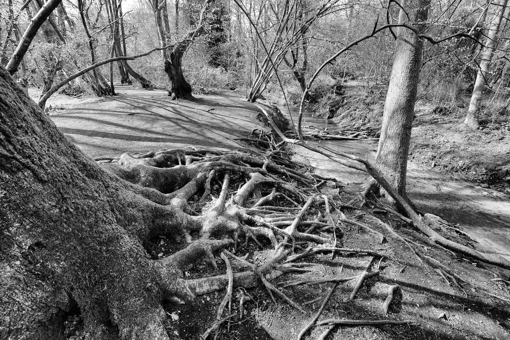 By the riverbank by rumpelstiltskin