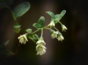 19th Apr 2021 - My 11th wildflower find of spring...