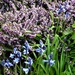 Flowering heather and bluebells--
