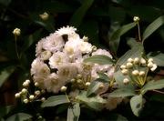 5th Apr 2021 - A white bouquet...