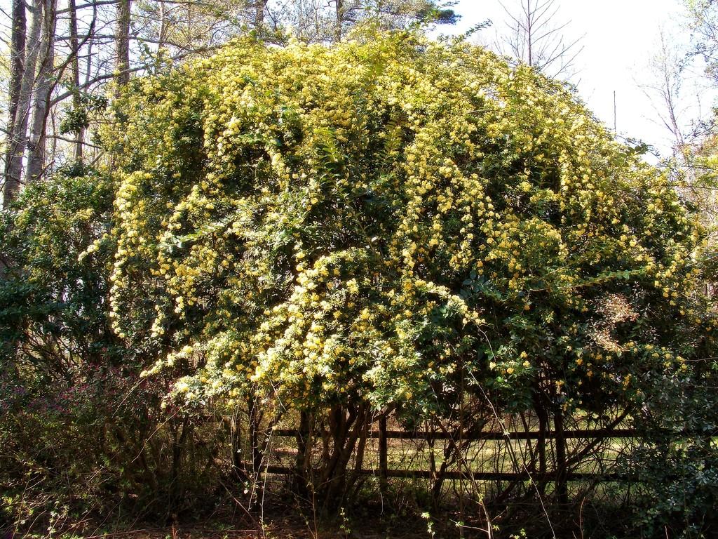 Tall shrubs are buried... by marlboromaam